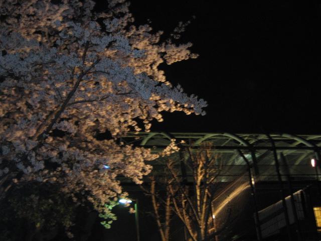 リバティヒルクラブの桜