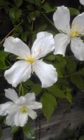 ガーデン花